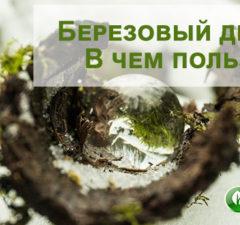 Березовый деготь: польза и вред продукта