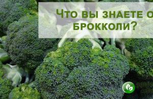 Брокколи - польза и вред