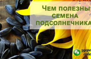 Семена подсолнечника: польза