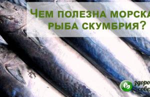 Скумбрия: польза и вред морской рыбы